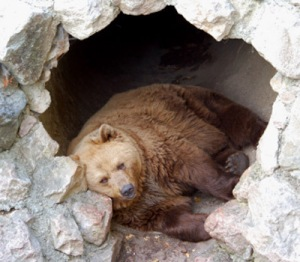 bear-in-cave